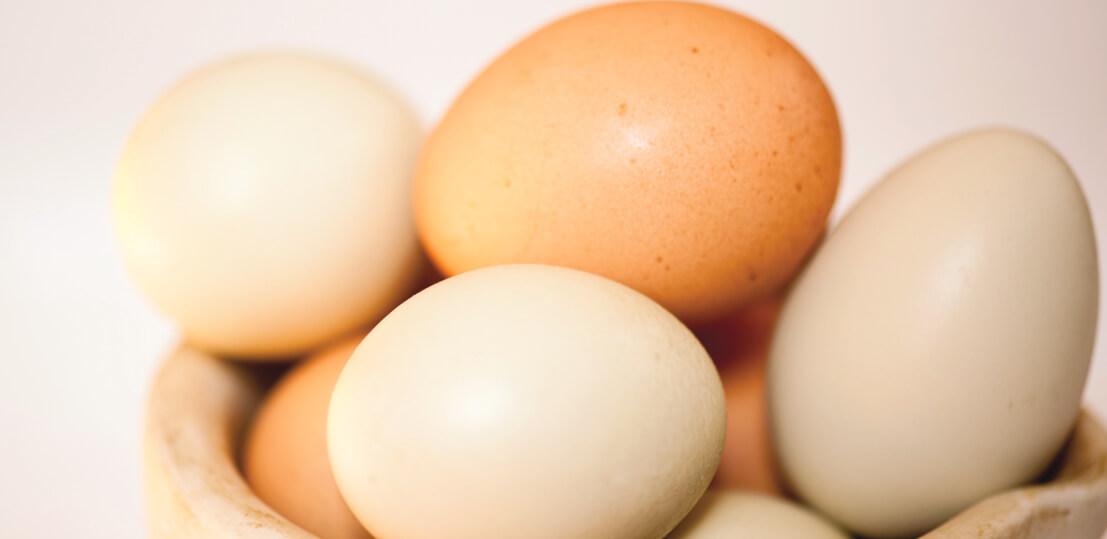 Cholestérol et œufs : faisons le point !