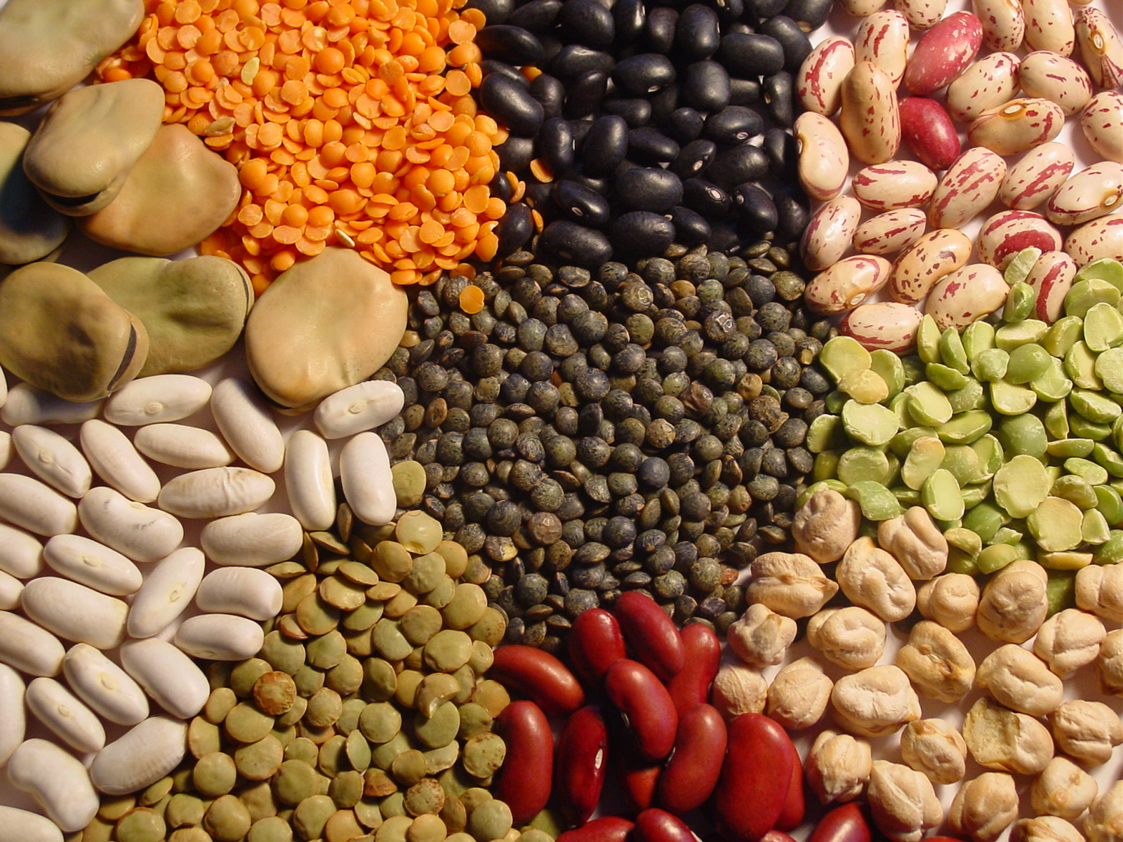 Les protéines végétales : céréales et légumineuses, l'association gagnante