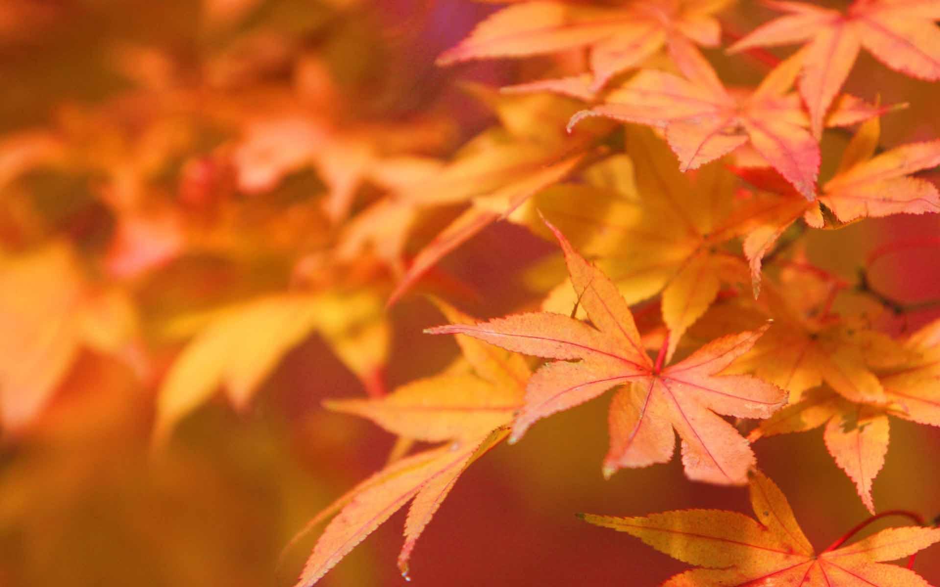 Découvrez les 3 aliments incontournables de l'automne !