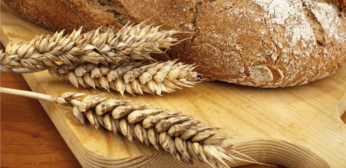 Le gluten : faut-il manger sans gluten ?