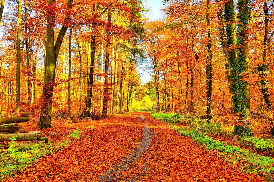 Vivre avec les saisons : l'automne